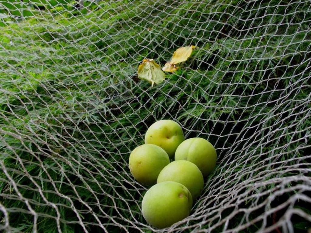 harvesting net